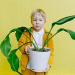 Citrusboom aanbieding